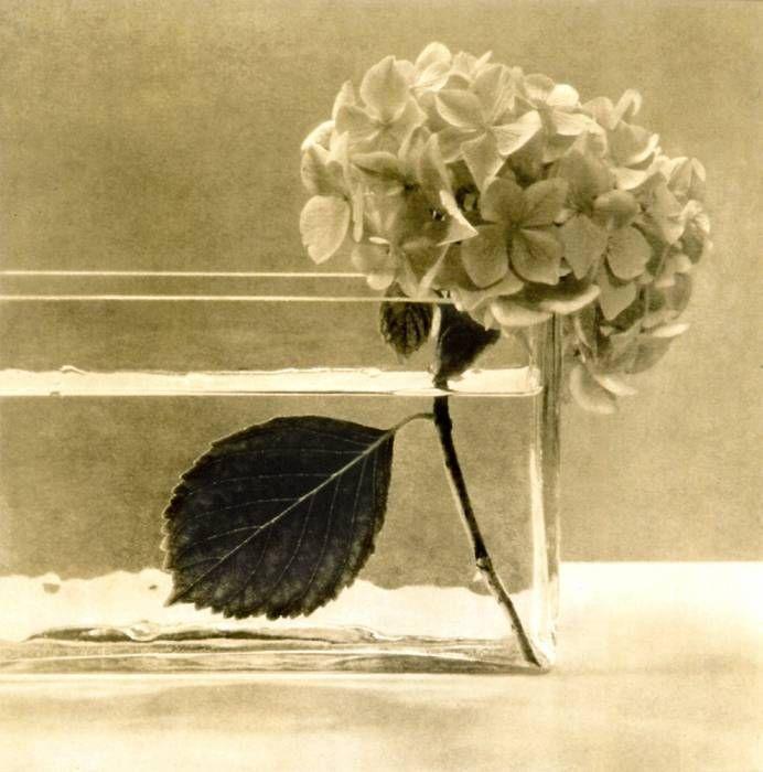 hortenciacarre