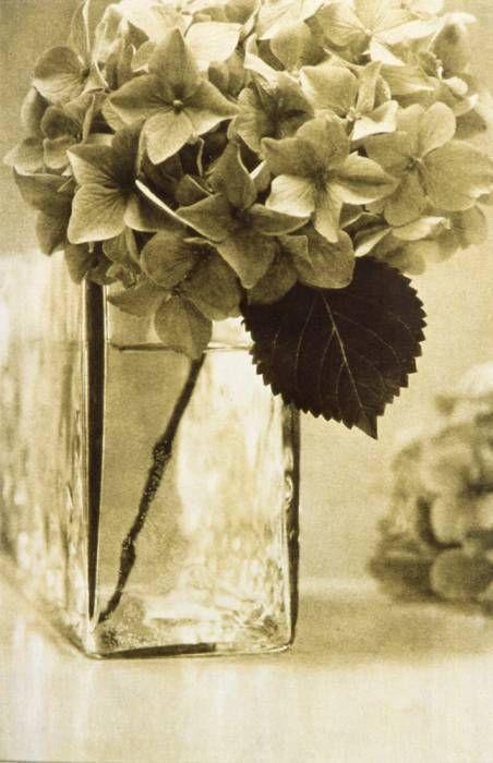 hortencia vertic