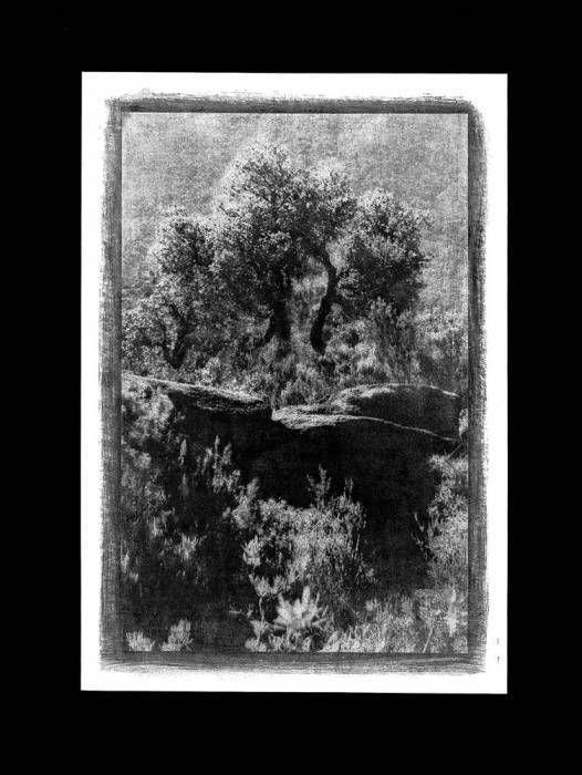 Chêne sur rochers, 2000