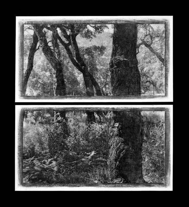 Troncs de chênes, diptyque, 2000