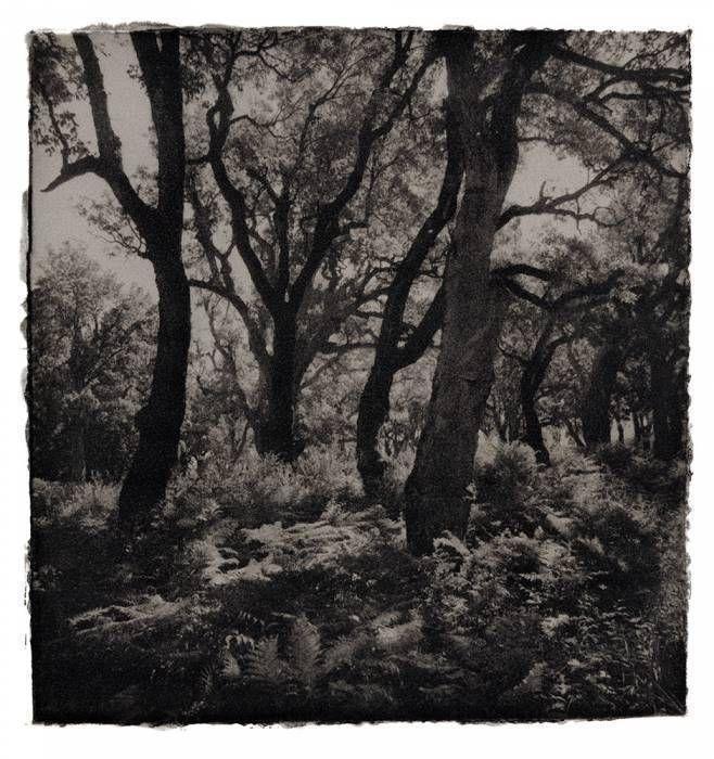Les Maures: forêt de chênes (1), 1995