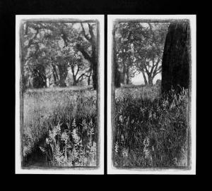 Tronc dans herbe, diptyque, 2000