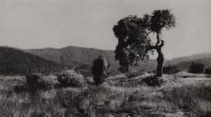 panoramaarbr