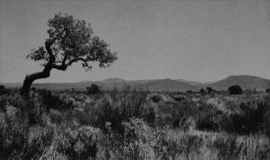 Maures: Chêne penché, 1995