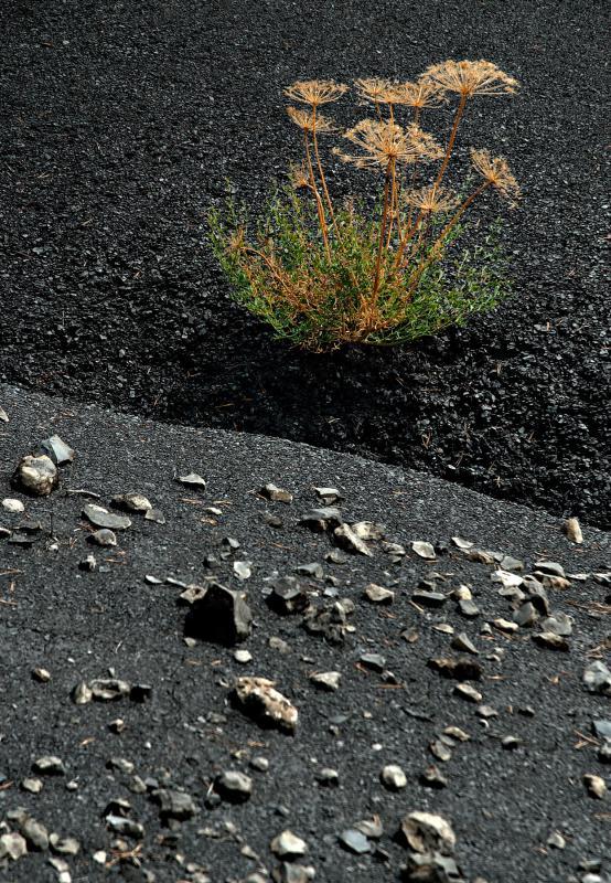 Digne fleurs de marnes noires