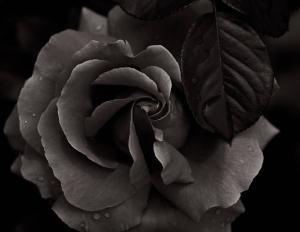 fleursrose00012