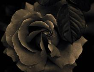 fleursrose00013