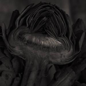 Coupe d'artichaut